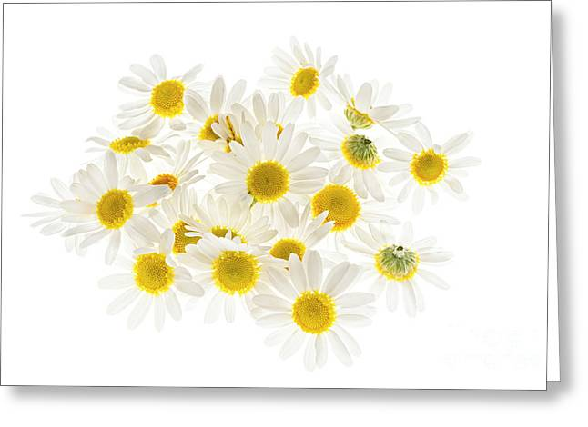 Loose Greeting Cards - Chamomile flowers Greeting Card by Elena Elisseeva