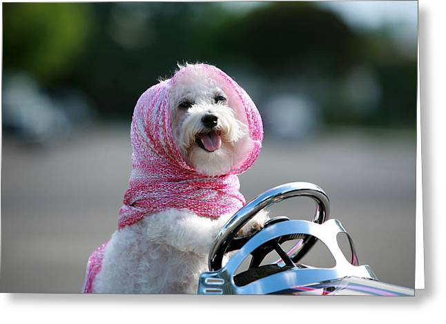Mikeledray Greeting Cards - Fifi goes for a ride Greeting Card by Michael Ledray