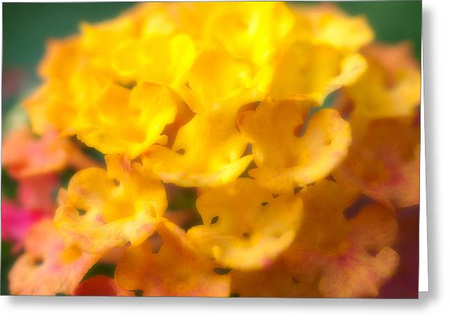 Small Photographs Greeting Cards - Flower Greeting Card by Sebastian Musial