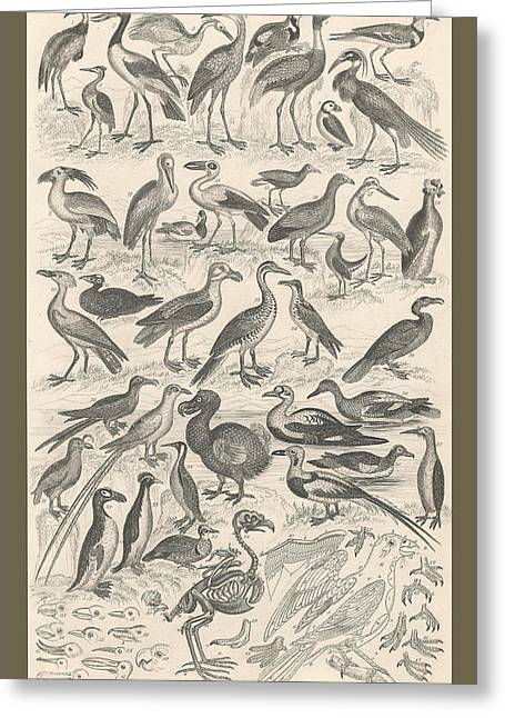 Extinct Greeting Cards - Ornithology Greeting Card by Captn Brown
