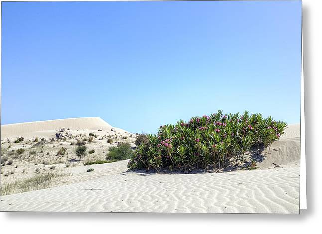 Asien Greeting Cards - Patara Beach - Turkey Greeting Card by Joana Kruse