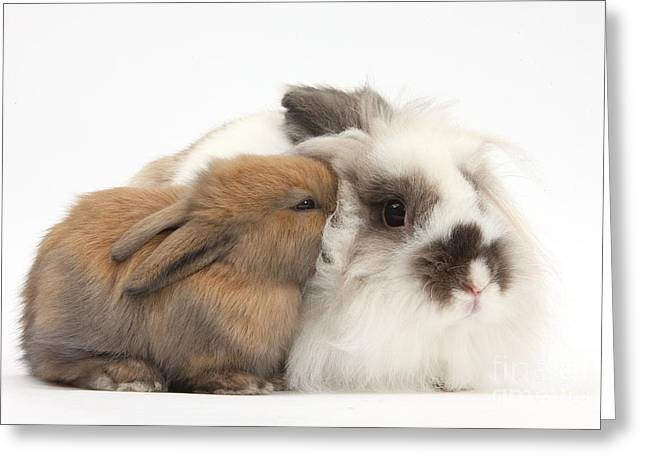 Adorable Bunny Greeting Cards - Rabbit And Baby Bunny Greeting Card by Mark Taylor