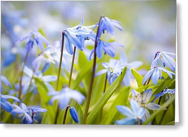 Flowering Plant Greeting Cards - Spring blue flowers Greeting Card by Elena Elisseeva