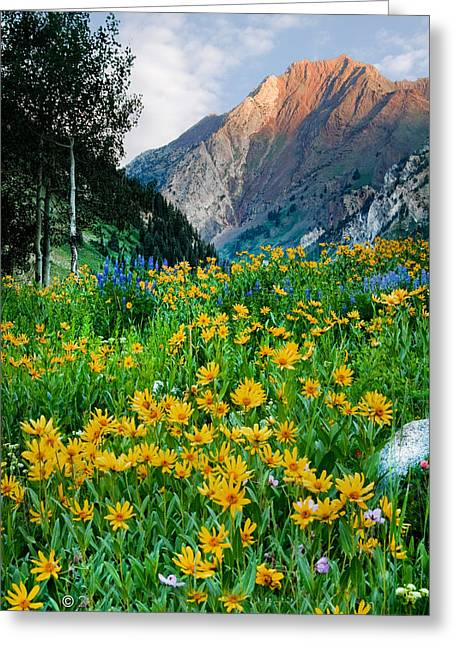 Wasatch Mountains Greeting Card by Utah Images