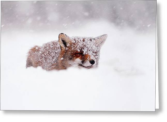 50 Shades Of White And A Touch Of Red Greeting Card by Roeselien Raimond