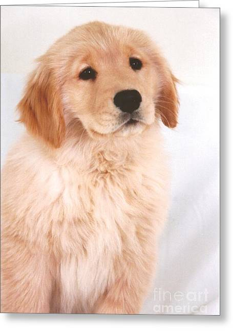 Puppies Photographs Greeting Cards - #501 26  Golden Retreiver Serious Greeting Card by Robin Lee Mccarthy Photography