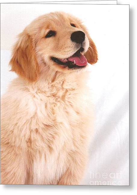 Occasion Greeting Cards - #501 27 Golden Giggle Golden Retriever Greeting Card by Robin Lee Mccarthy Photography