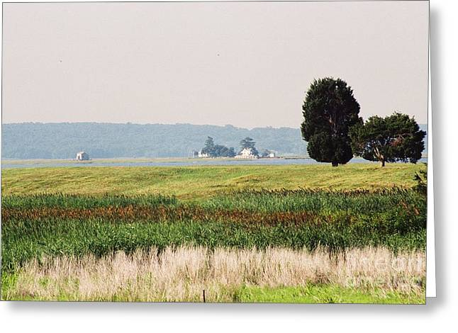 Nature Study Greeting Cards - #562 6a Plum Island Marsh Grass Salt and Pepper Trees Greeting Card by Robin Lee Mccarthy Photography