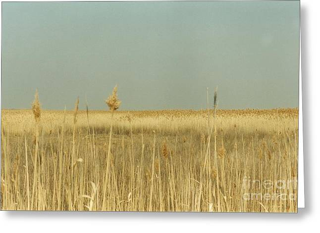 Nature Study Greeting Cards - #585 21 Plum Island Marsh Grass Greeting Card by Robin Lee Mccarthy Photography