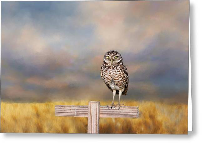 Kim Photographs Greeting Cards - Burrowing Owl  Greeting Card by Kim Hojnacki