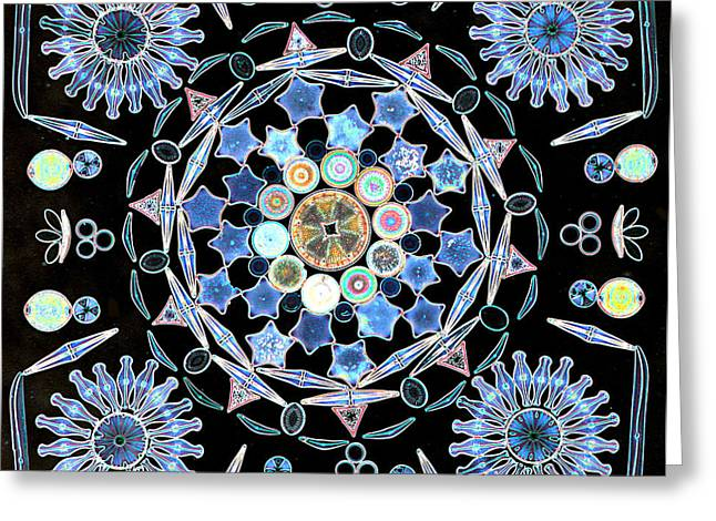Lm Greeting Cards - Diatoms Greeting Card by M I Walker