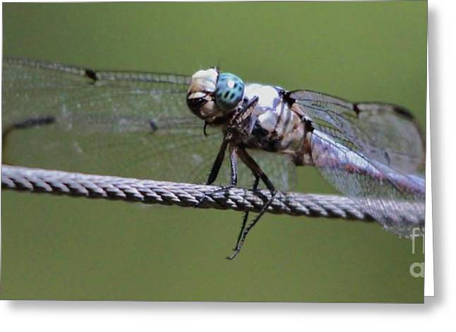 Dragonfly  Greeting Card by Paulette Thomas