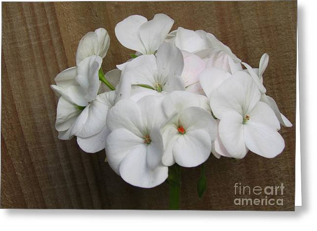 Greeting Cards - Flower Greeting Card by Joyce Woodhouse