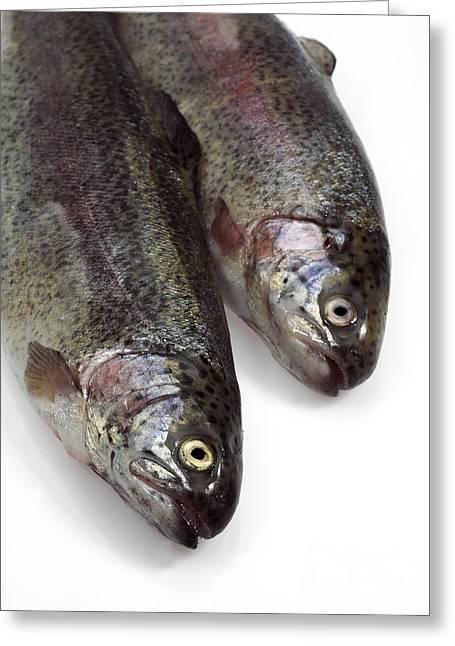 Rainbow Trout Greeting Cards - Fresh Rainbow Trout Salmo Gairdneri Greeting Card by Gerard Lacz