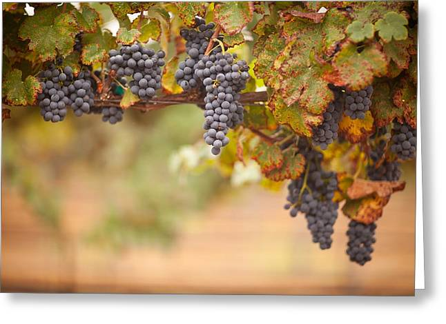 Merlot Greeting Cards - Grapes on the Vine Greeting Card by Andy Dean