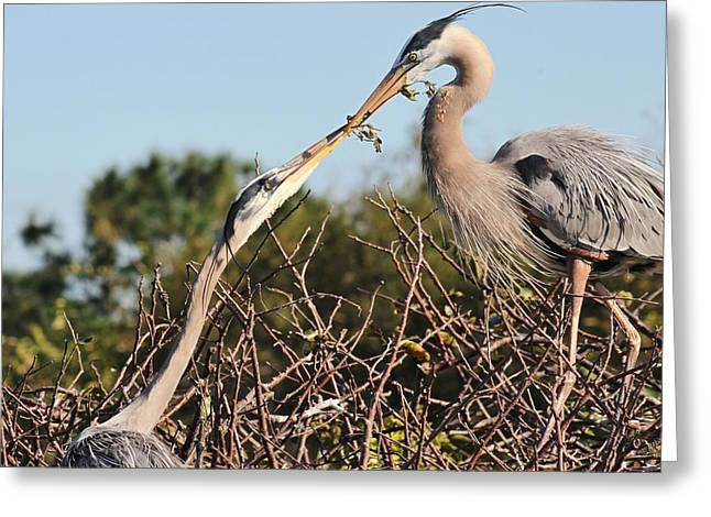 I Pyrography Greeting Cards - Herons In Love Greeting Card by Valia Bradshaw