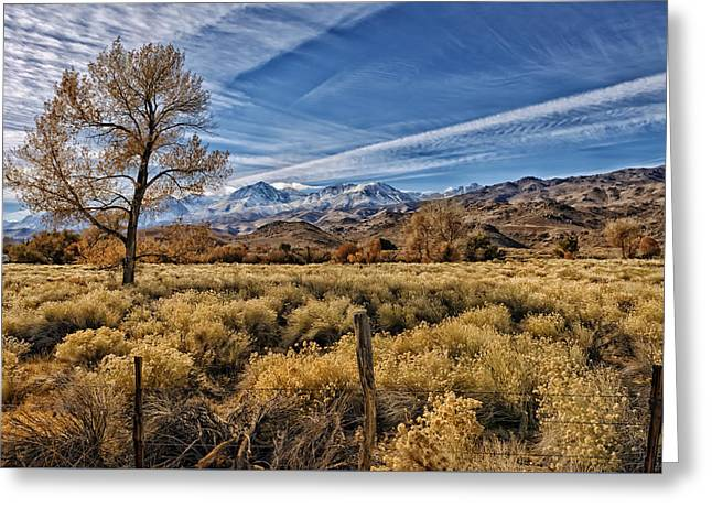 Scrub Brush Greeting Cards - Home On The Range Greeting Card by Mountain Dreams