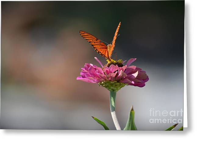Print Photographs Greeting Cards - Longwing Butterfly  Greeting Card by Ruth  Housley