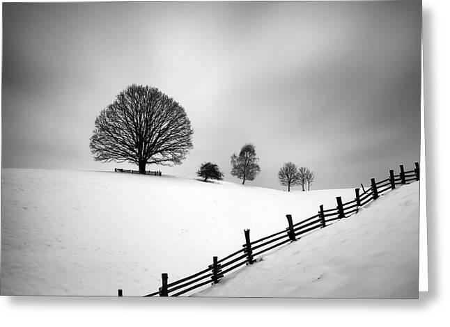 Winter Trees Greeting Cards - 6 Greeting Card by Martin Rak