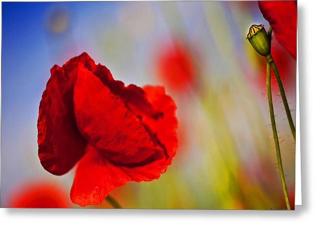 Photografie Greeting Cards - Mohnblume Greeting Card by Renata Vogl