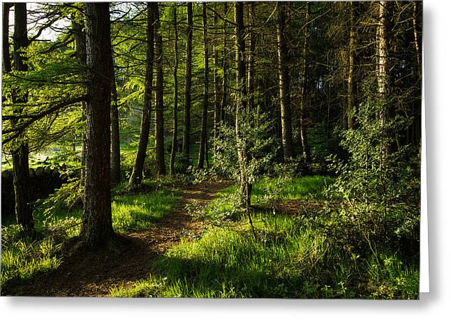 Fantasy World Greeting Cards - Morning Light Shining Through Pine Forest. Greeting Card by Daniel Kay
