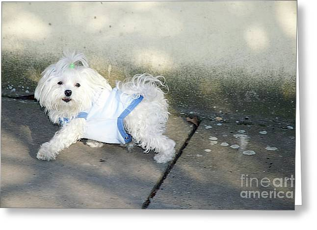 My Small Dog Greeting Card by Elvira Ladocki