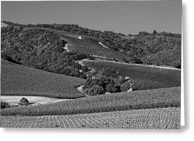 Napa Valley And Vineyards Greeting Cards - Napa Valley Vineyards Greeting Card by Mountain Dreams