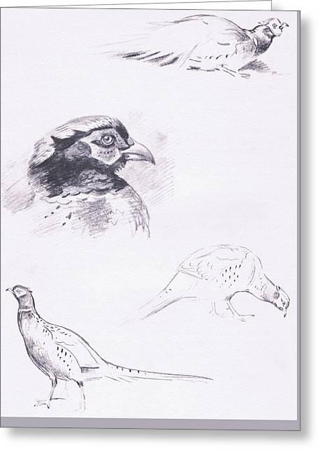 Pheasants Greeting Card by Archibald Thorburn