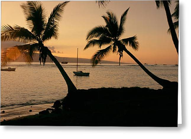 Evening Scenes Greeting Cards - Silhouette Of Palm Trees At Dusk Greeting Card by Panoramic Images