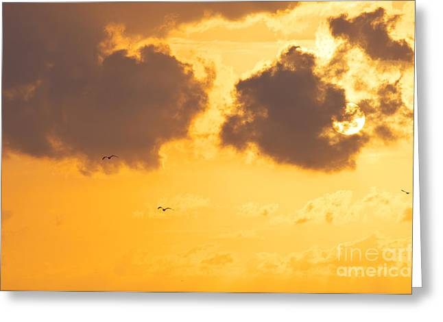 Flying Seagull Greeting Cards - Sunset Greeting Card by Angela Doelling AD DESIGN Photo and PhotoArt
