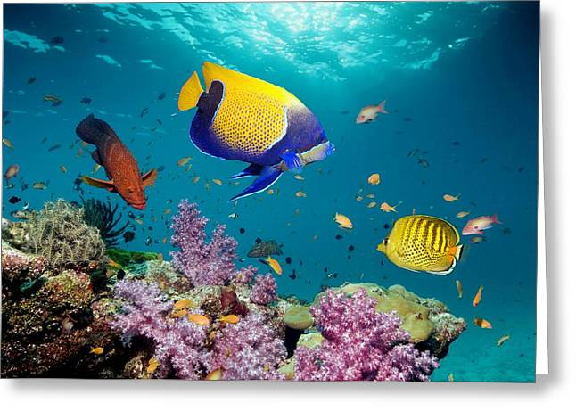 Reef Fish Photographs Greeting Cards - Tropical Reef Fish Greeting Card by Georgette Douwma