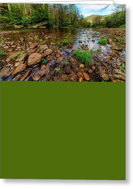 Williams River Greeting Cards - Williams River Spring Greeting Card by Thomas R Fletcher