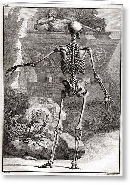 Science Collection - Greeting Cards - 18th Century Anatomical Engraving Greeting Card by Science Source