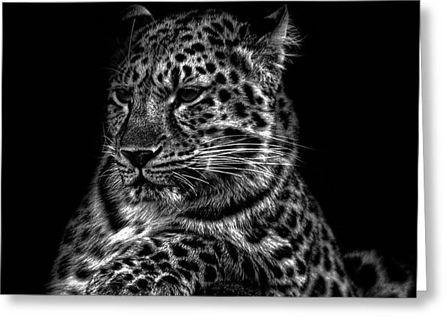 Amur Leopard Greeting Card by Martin Newman