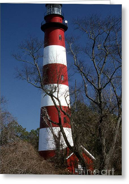 Ocean Art Photos Greeting Cards - Assateague Island Lighthouse Greeting Card by Skip Willits