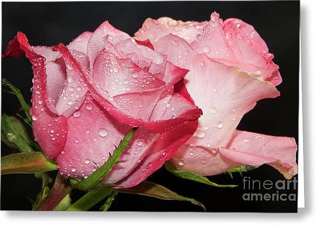 Beautiful Roses Greeting Card by Elvira Ladocki