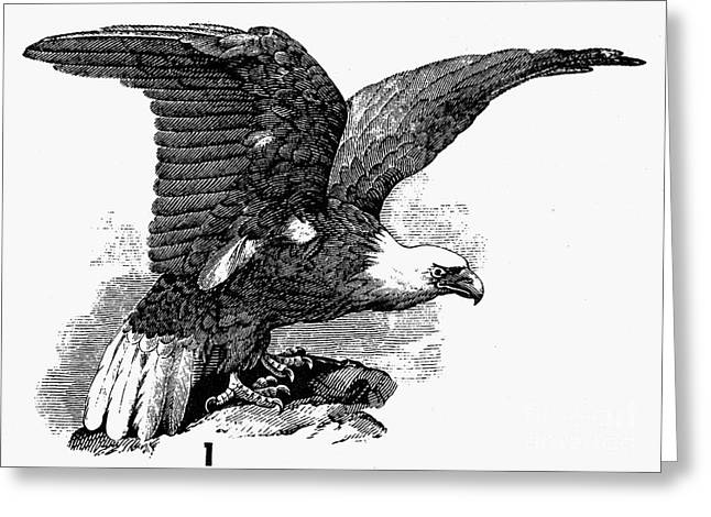 Eagle, 19th Century Greeting Card by Granger