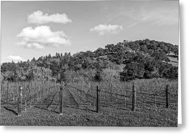 Napa Valley And Vineyards Greeting Cards - Napa Valley Vineyard Greeting Card by Mountain Dreams