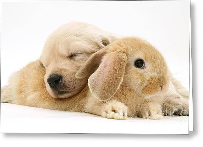Science Collection - Greeting Cards - Rabbit And Puppy Greeting Card by Jane Burton