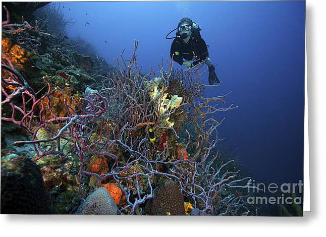 Scuba Diving Photographs Greeting Cards - Scuba Diver Swims Underwater Amongst Greeting Card by Terry Moore