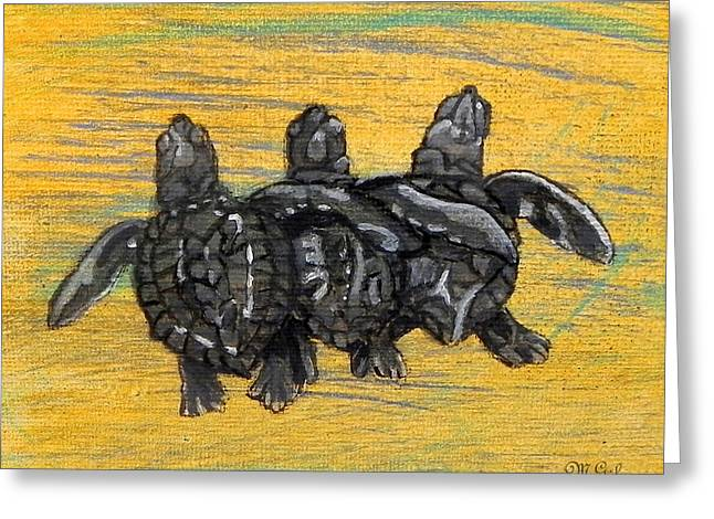 Hawksbill Sea Turtle Greeting Cards - Sea Turtles Greeting Card by W Gilroy