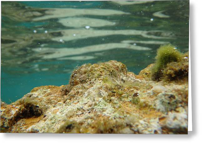 Tourqouise Greeting Cards - Sea world underwater Greeting Card by Newnow Photography By Vera Cepic