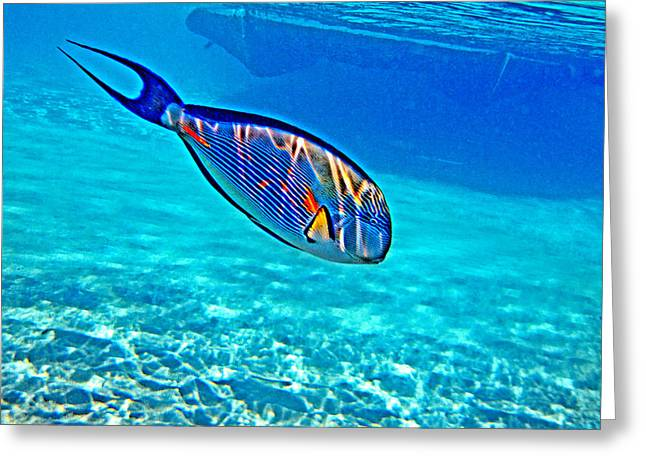 Mccoy Greeting Cards - Underwater World. Greeting Card by Andy Za