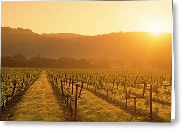 California Vineyard Greeting Cards - Vineyard, Napa Valley, California, Usa Greeting Card by Panoramic Images