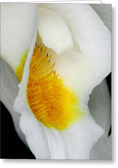 Peaceful Greeting Cards - Exotic Orchids of C Ribet Greeting Card by C Ribet