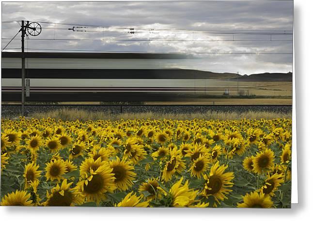 Railway Greeting Cards - 78 Sunflowers Greeting Card by Kike Balenzategui