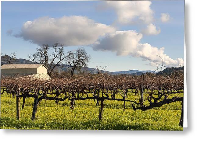 California Vineyard Greeting Cards - Napa Valley Vineyard Greeting Card by Mountain Dreams