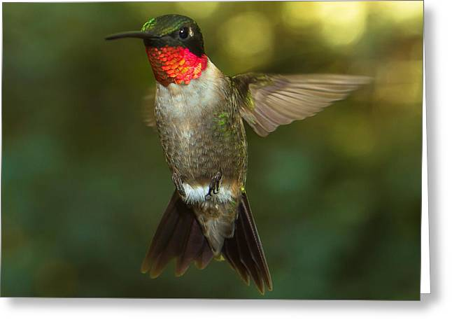 Spider And Fly Greeting Cards - Ruby-Throated Hummingbird Greeting Card by Robert L Jackson