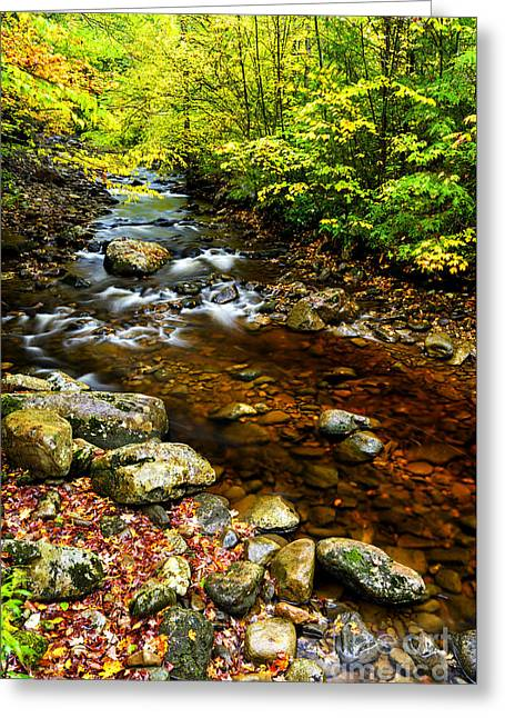 Mountain Valley Greeting Cards - Tea Creek Monongahela National Forest Greeting Card by Thomas R Fletcher