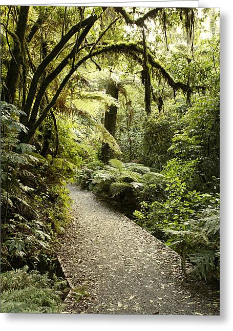 Humidity Greeting Cards - Walking trail Greeting Card by Les Cunliffe